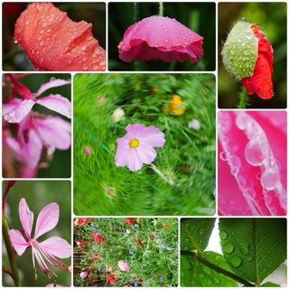Rainy flowers.jpg