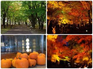 fall22.jpg