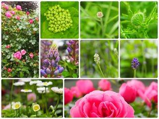 garden25.jpg