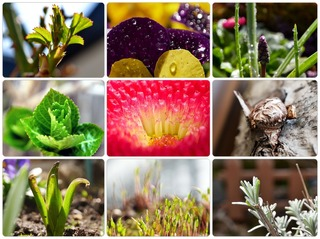 garden419.jpg