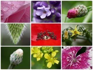 gflowers.jpg