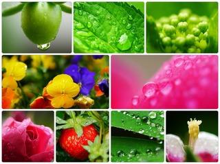 raindrop.jpg