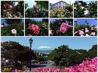 rosegarden27.jpg