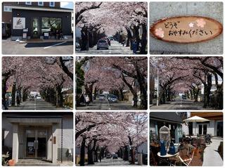 sakuragaoka.jpg