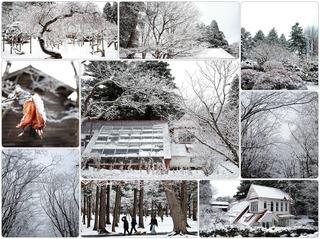 snowdy2.jpg